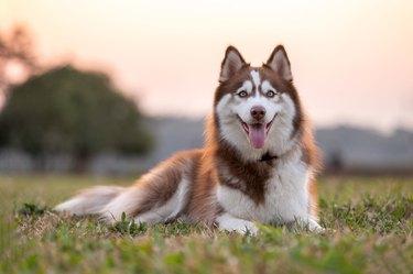 dog portrait outside at the park on summer