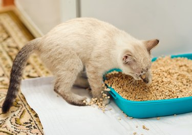 kitty digging in cat litter