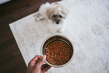 Woman Holds Bowl of Kibble for Her Waiting Dog