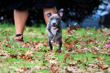Portrait Of Dog Running On Field At Back Yard
