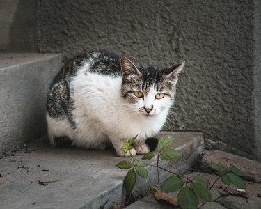 cat street cat street kitten