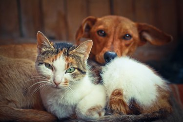 Love pets sleeping on a rug. Dog and cat lie together and are friends. Veterinary stock photo