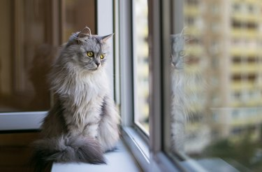 Beautiful grey cat sitting on windowsill and looking to a