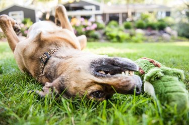 8 Super Tough Toys For Dogs Who Destroy Everything