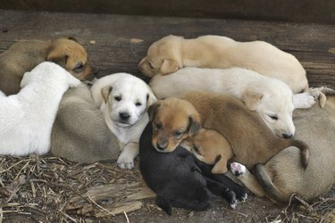 Several puppies playing