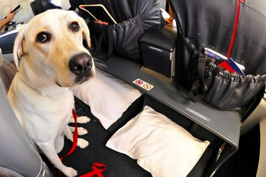 A dog in an airplane cockpit