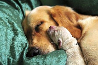 Mother and newborn puppy sleeping