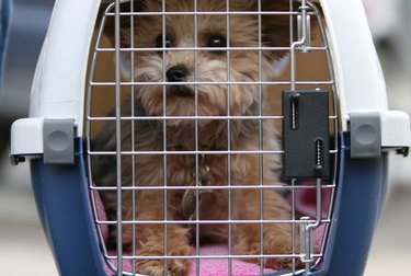 A small dog in a carrier.