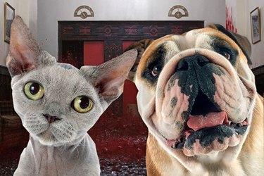 dog and cat looking at camera