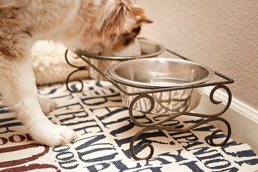 Placemats make cleanup a breeze for Fido's dining spot.