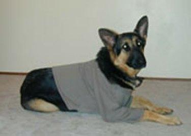 How to Make a Dog Sweatshirt