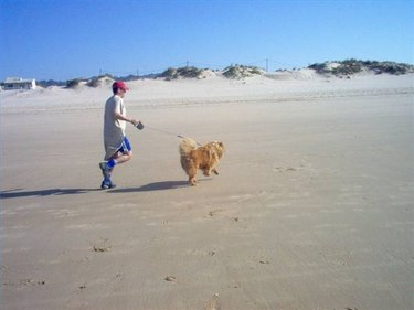 Dog and owner run on beach