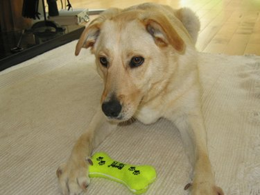 Puppy On Alert