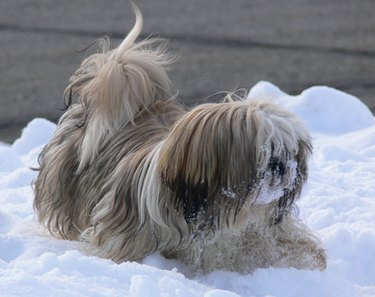 Small dog in snow