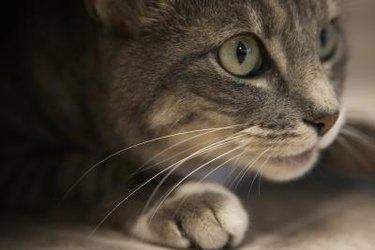 Close-up of a cat.