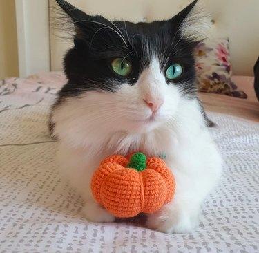 Catnip Pumpkin Toy by SusluPawPetToys
