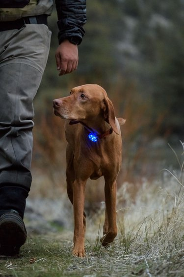 LED dog light clip