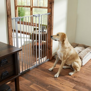 tall pet gate