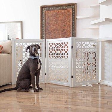 modern pet gate