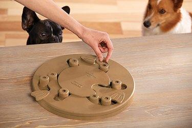 advanced dog puzzle toy