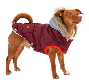 GF Pet® Winter Sailor Dog Parka