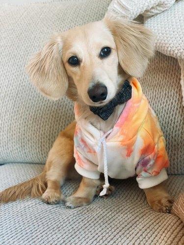 dog dressed as beanie baby