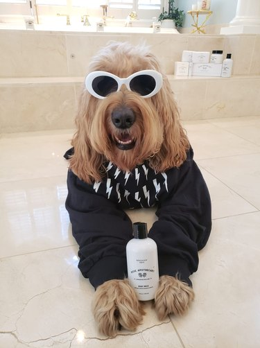 dog dressed as character from  Schitt's Creek