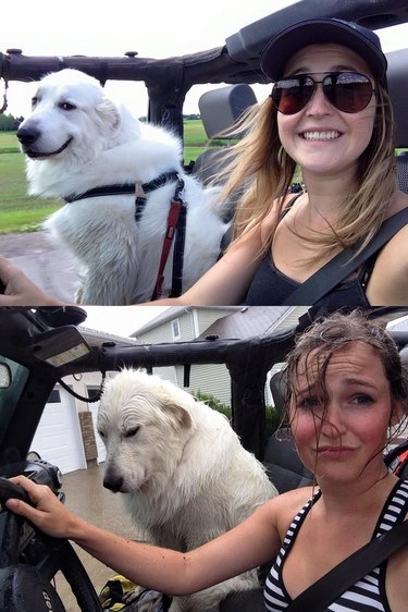 Young woman driver and large white dog in front passenger seat of car with no roof before and after getting rained on