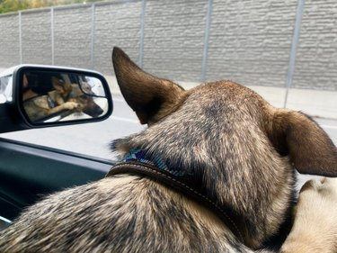 Dog sticking its head out of window of front passenger seat of car