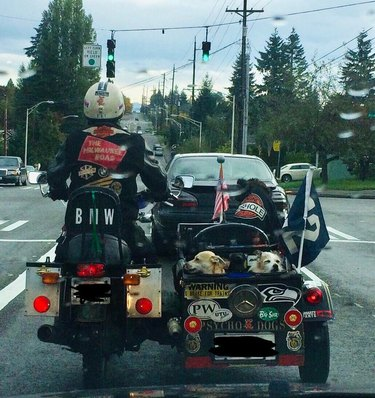 Two small dogs in sidecar of motorcycle