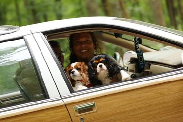 Two Cavalier King Charles Spaniels in front passenger seat of car
