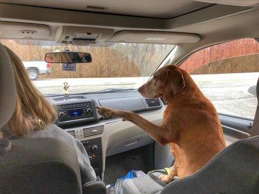 Dog in front passenger seat of car pointing forward with one paw