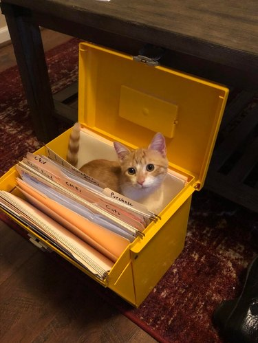 Cat sitting in portable plastic filing box
