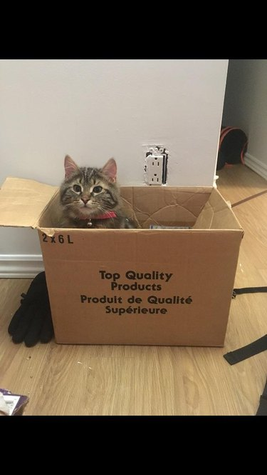 """Cat sitting in box that says """"Top Quality Produce"""""""