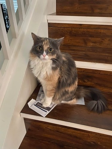 Cat sitting on two pieces paper on the stairs