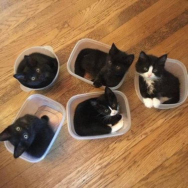 Five kittens sitting in small plastic containers