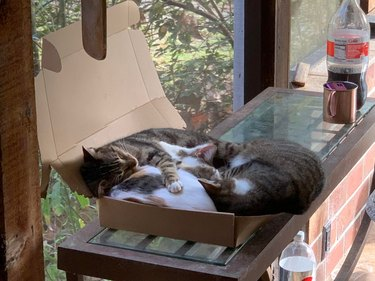 Three cats laying in shallow cardboard box