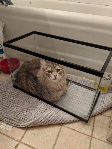 Cat laying in empty aquarium