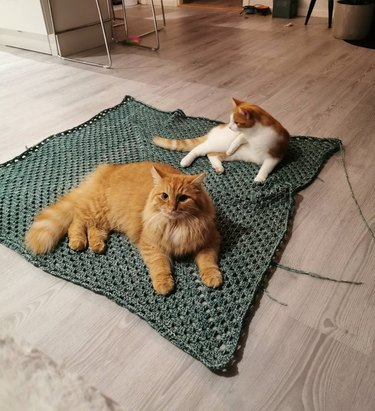 Cats sitting on square of crocheted material
