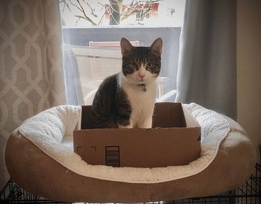 Cat sitting in cardboard box on top of cat bed