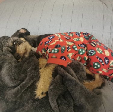dog in flannel pajamas