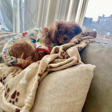 dog lying down in pajamas