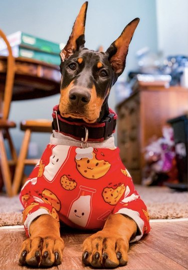 dog in cookie pajamas