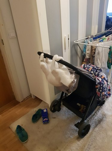 cat hanging upside down from baby stroller