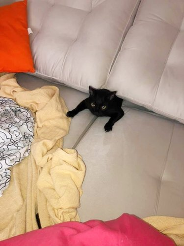 cat getting sucked into couch cushions