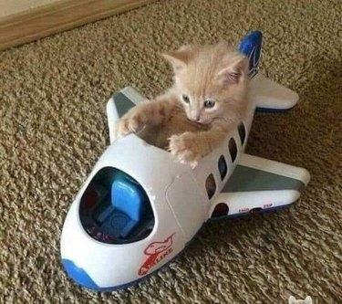 kitten piloting toy plane