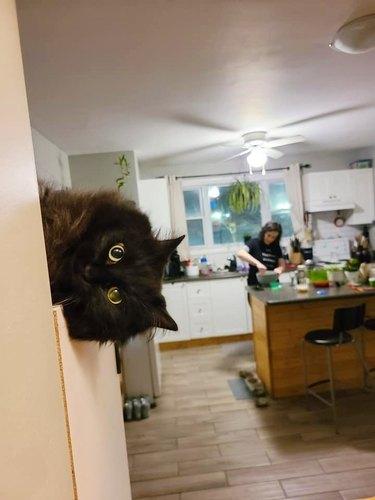 cat pokes head around corner