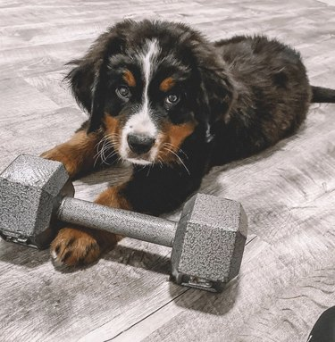 dog with weights