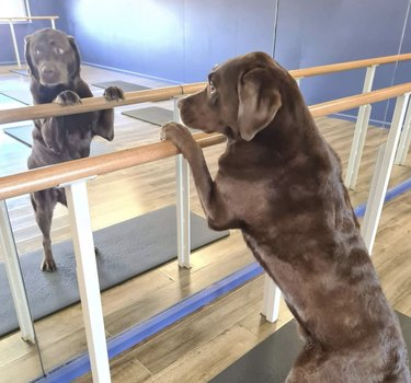 dog doing a barre workout