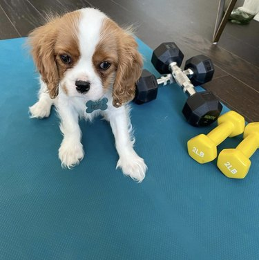dog on yoga mat with weights